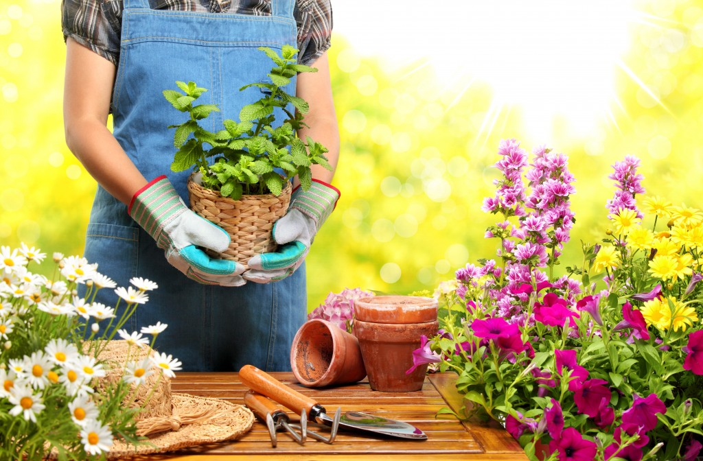 Gardener holding a pot with plant in garden